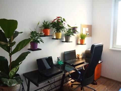 Interiérová zeleň v kancelárii po úprave