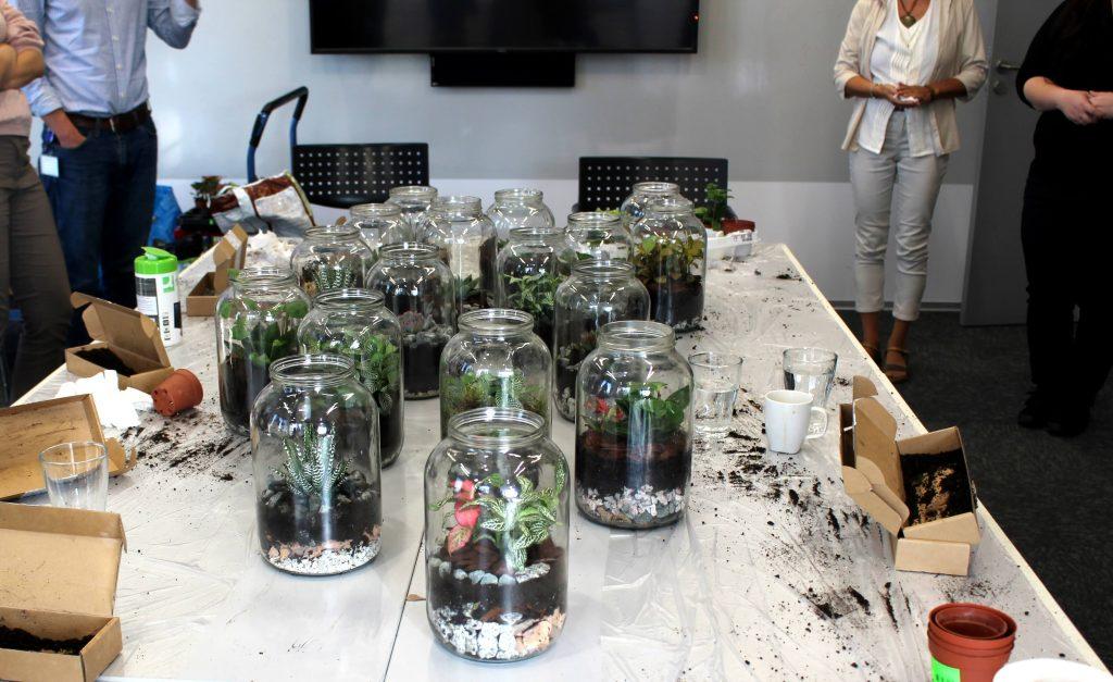 workshop rastlinné teráriá